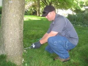 Emerald ash borer treatment injections
