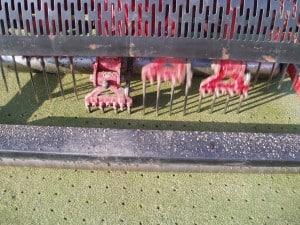 Lawn Deep Tine Aeration