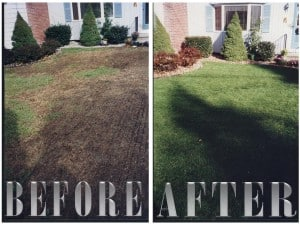Lawn Seeding and Overseeding